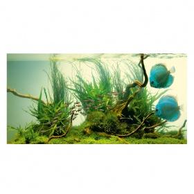 Удобрения для аквариумных растений фото